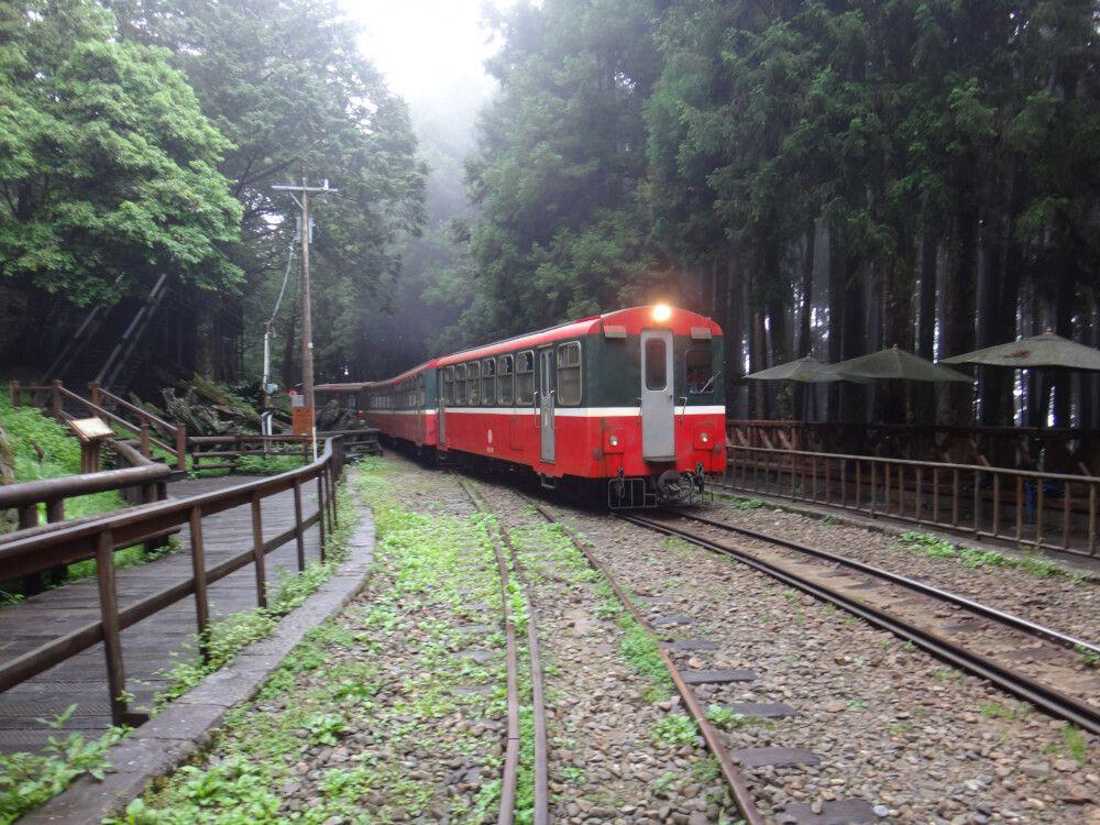 Die alte Schmalspurbahn war ursprünglich dazu gedacht, die Edelhölzer ins Tal hinunter zu transportieren. Heute bringt sie Touristen den Berg hinauf.