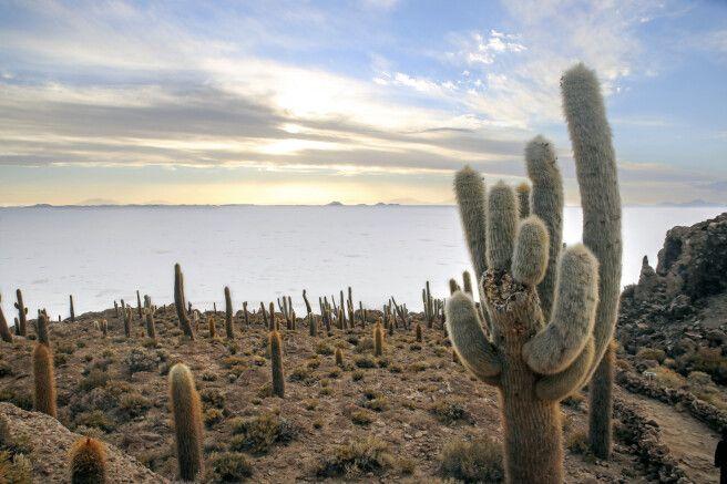 Die kakteenbewachsene Insel Incahuasi inmitten des Salar de Uyuni