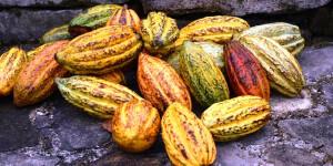 Kakao ist in gesamt Lateinamerika ein wichtiger Bestandteil, so auch in Belize
