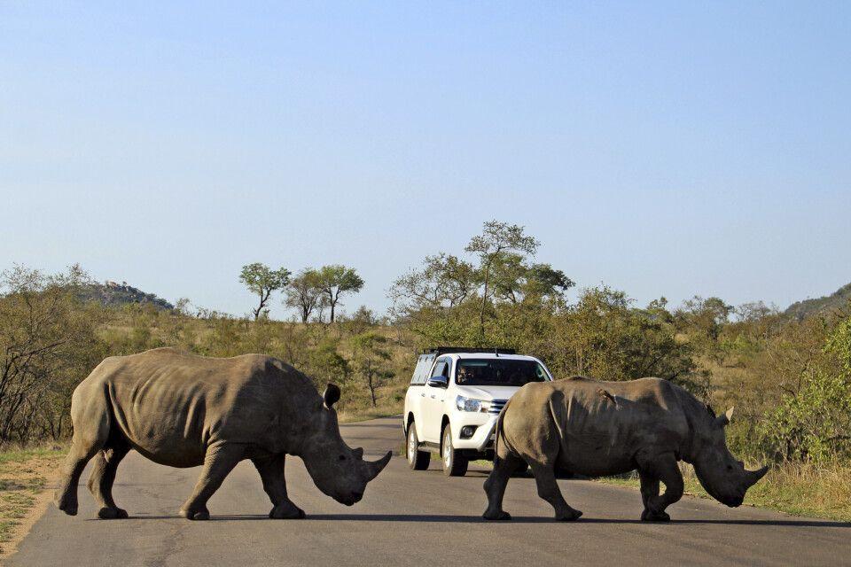 """Die beiden Nashörner haben im Krüger-Nationalpark """"Vorfahrt"""""""