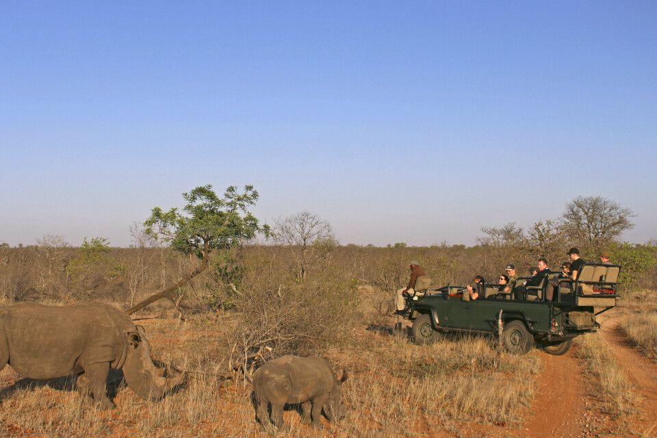 Aufregende Begegnung mit Nashörnern bei einer Pirschfahrt