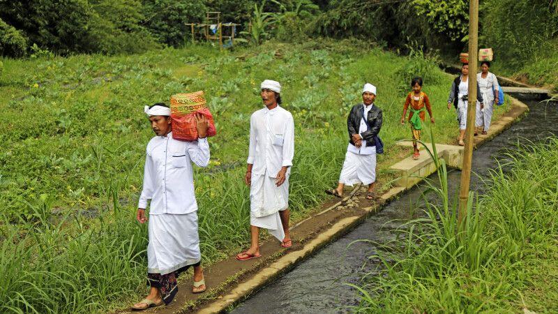 Durch Reisfelder auf dem Weg zum Tempel auf Bali © Diamir