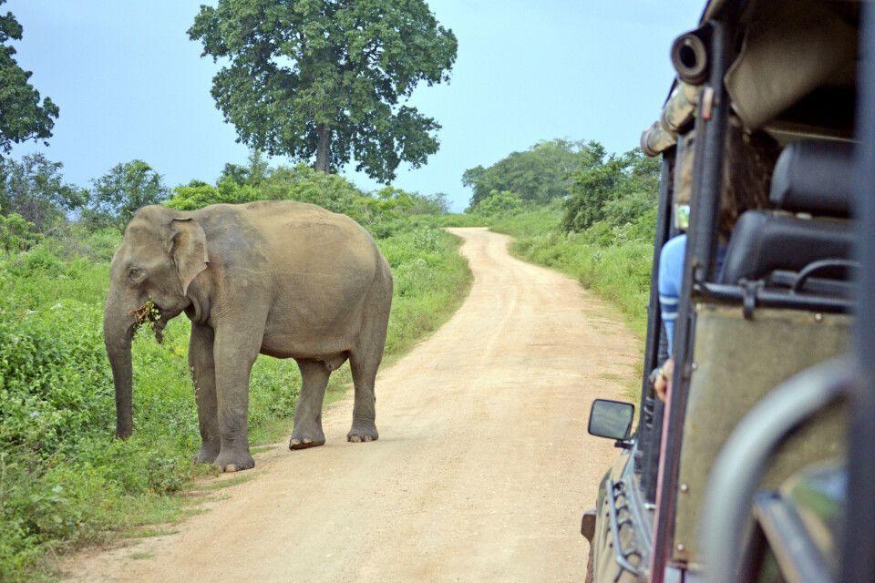 Auf Safari im Nationalpark
