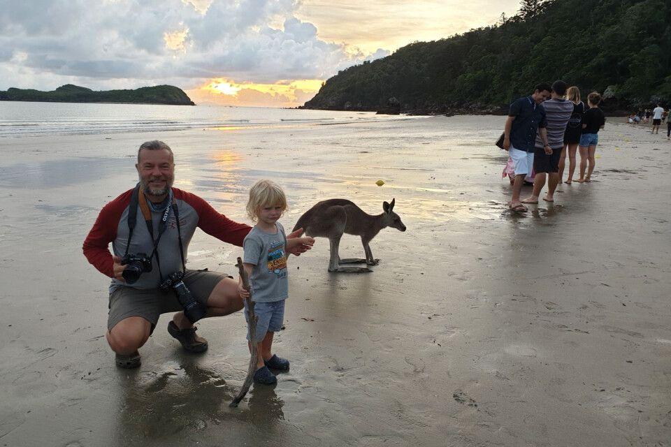 Pflichttermin mit Känguru! Cape Hillsborough ist ein unbedingtes MUSS auf jeder Australienreise!