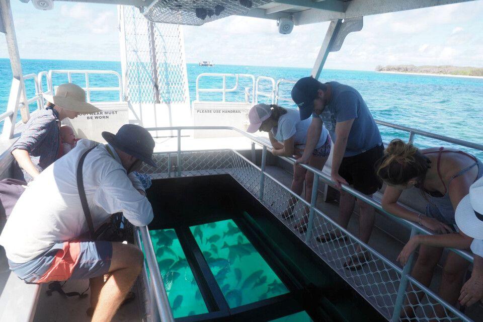 Glasbodenboot gibt Gelegenheiten auch für kleine Kinder, die Unterwasserwelt zu sehen und zu erleben. Für unseren Dreijährigen ein absolutes Erlebnis!