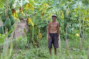 Bauer in Indonesien: Papayas!
