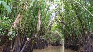 Wasserkokosnuss gesäumte Kanäle im Mekongdelta