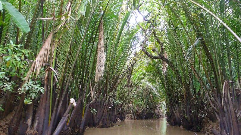 Wasserkokosnuss gesäumte Kanäle im Mekongdelta © Diamir