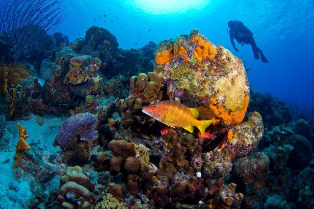 Schillernde Unterwasserwelt