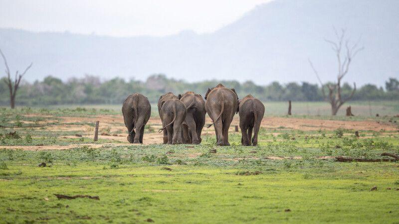 Elefantenherde © Diamir