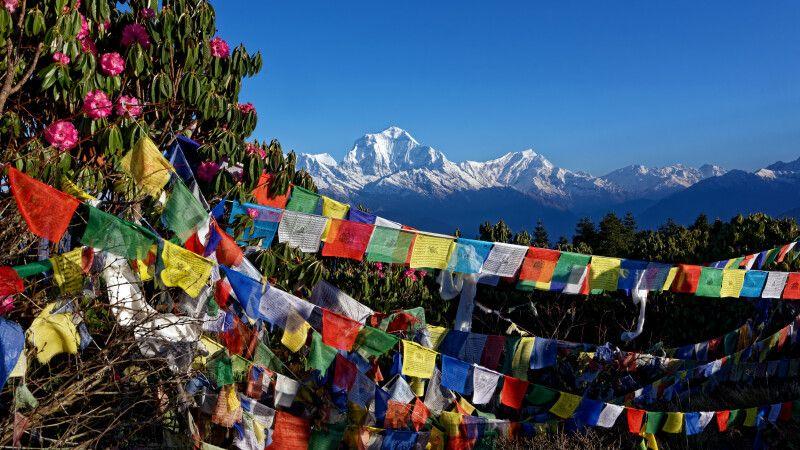 Farbkontraste auf dem Poon Hill (3210m) in der Annapurna-Region © Diamir