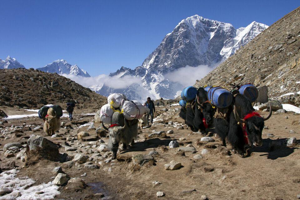 Yak-Karawane auf dem Weg ins Mount-Everest-Basislager
