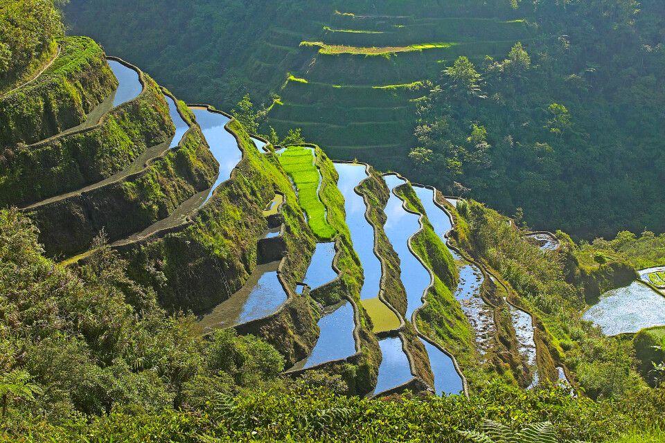 Reisterrassen von Banaue im Norden der Insel Luzón in den philippinischen Zentralkordilleren