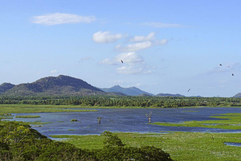 See in Tissamaharama