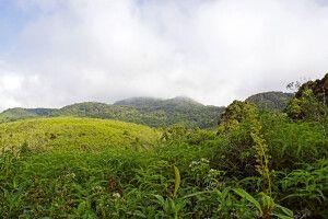 Wanderung im Sinharaja-Regenwald
