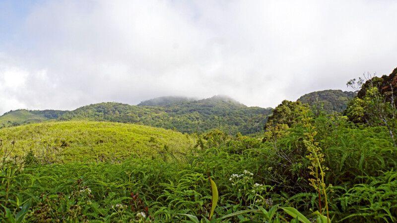 Sinharaja Regenwald © Diamir
