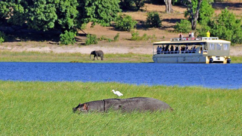 Flusspferdsichtung während einer Bootstour auf dem Chobe-Fluss © Diamir