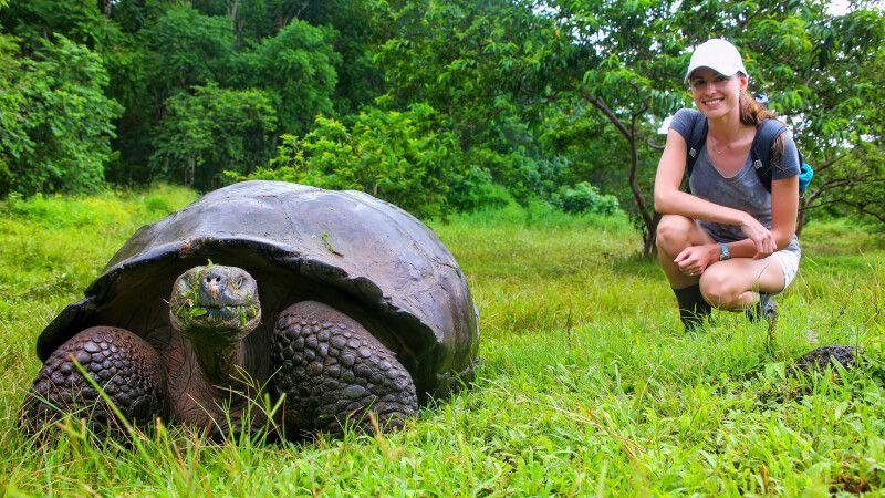 Galapagos-Riesenschildkröte auf Santa Cruz Island im Galapagos-Nationalpark © Diamir