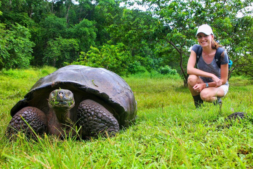 Galapagos-Riesenschildkröte auf Santa Cruz Island im Galapagos-Nationalpark