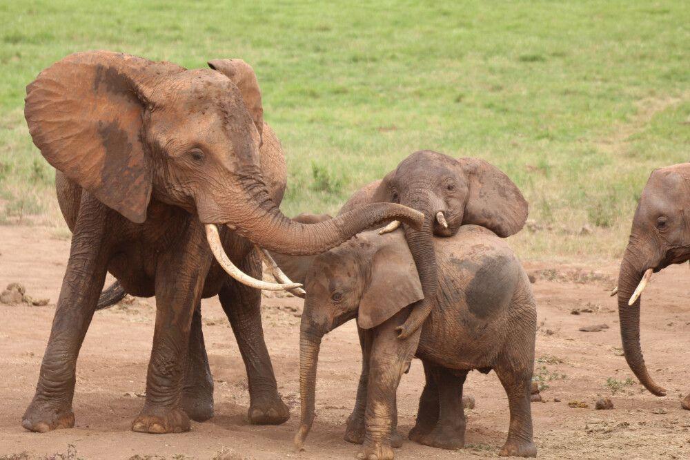 KEN_2019_1SLA_junge-Elefanten-18.jpg