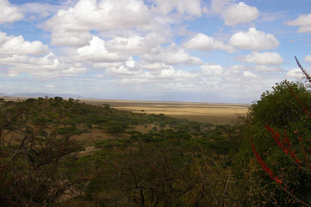 TANLTC_230519_1GVO_Serengeti-NP.jpg