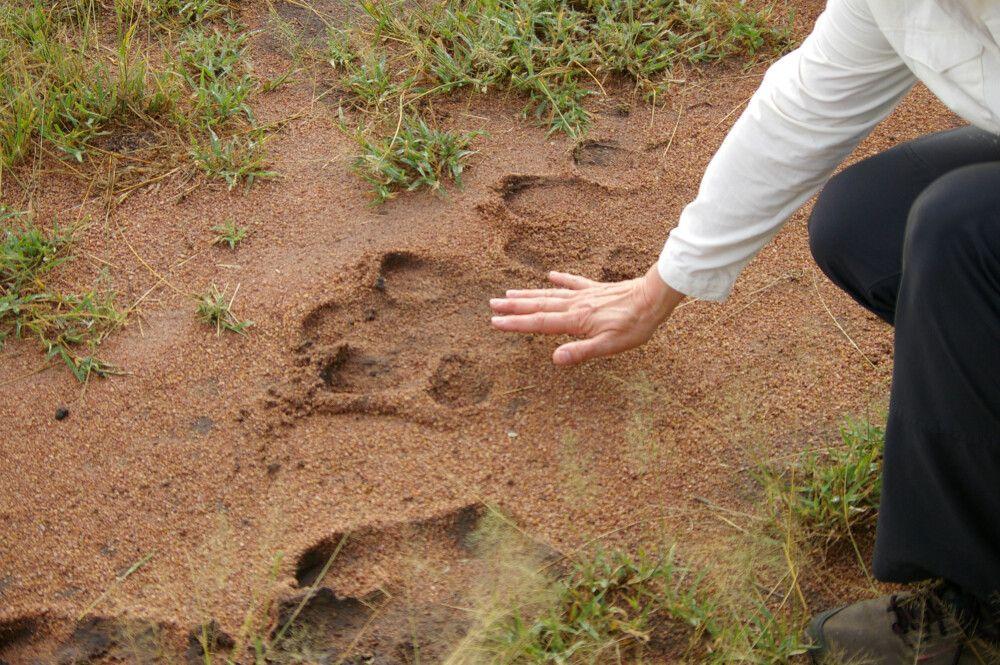 TANLTC_230519_1GVO_Serengeti-NP-2.jpg