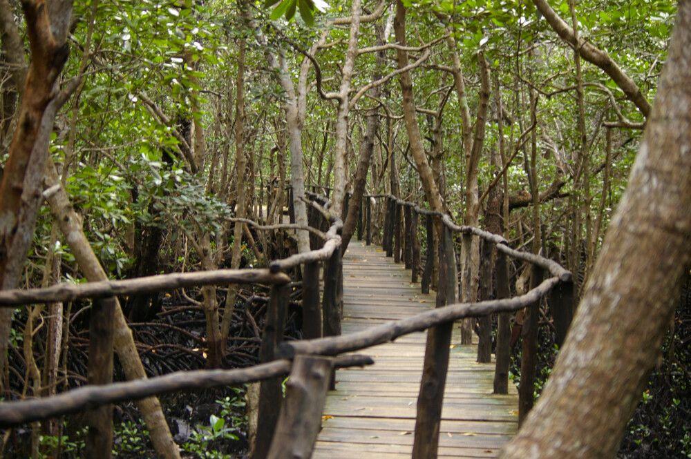 TANLTC_230519_1GVO_Sansibar-Jozani-Forest.jpg