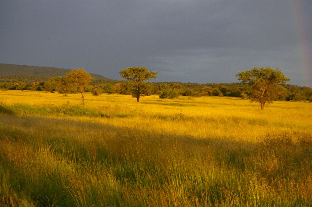 TANLTC_230519_1GVO_Savanne-Serengeti-NP.jpg