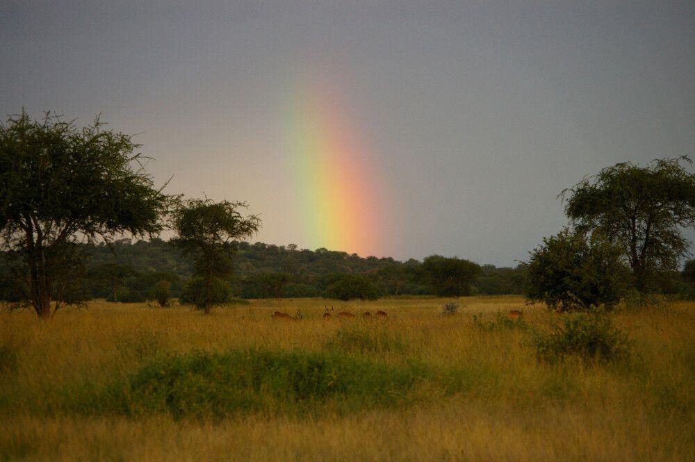 TANLTC_230519_1GVO_Regenbogen-ueber-der-Serengeti.jpg