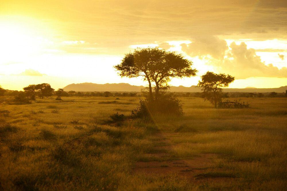 TANLTC_230519_1GVO_Sunset-Serengeti-NP.jpg