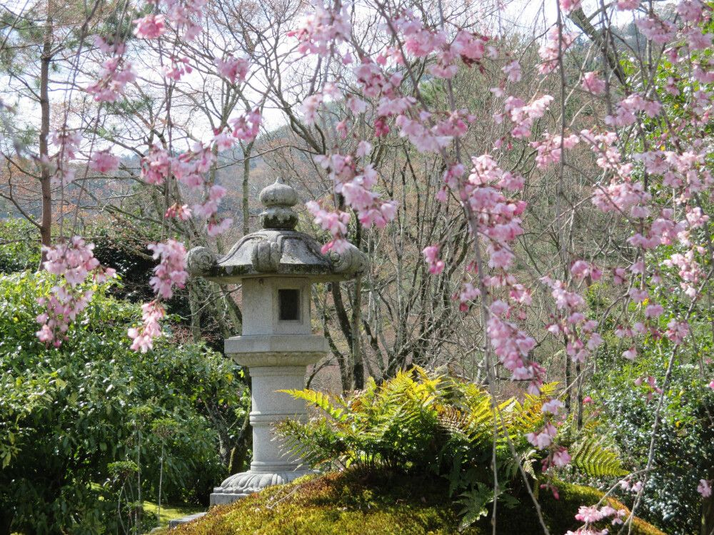 Die Kirschblüte in Japan ist ein unvergessliches Erlebnis.