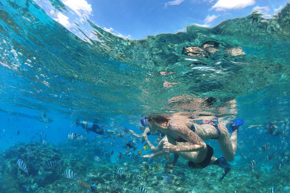 Im Korallengarten der Lagune von Bora Bora