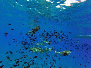 Begegnungen unter Wasser