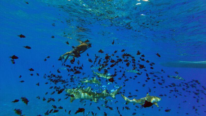 Begegnungen unter Wasser  © Diamir