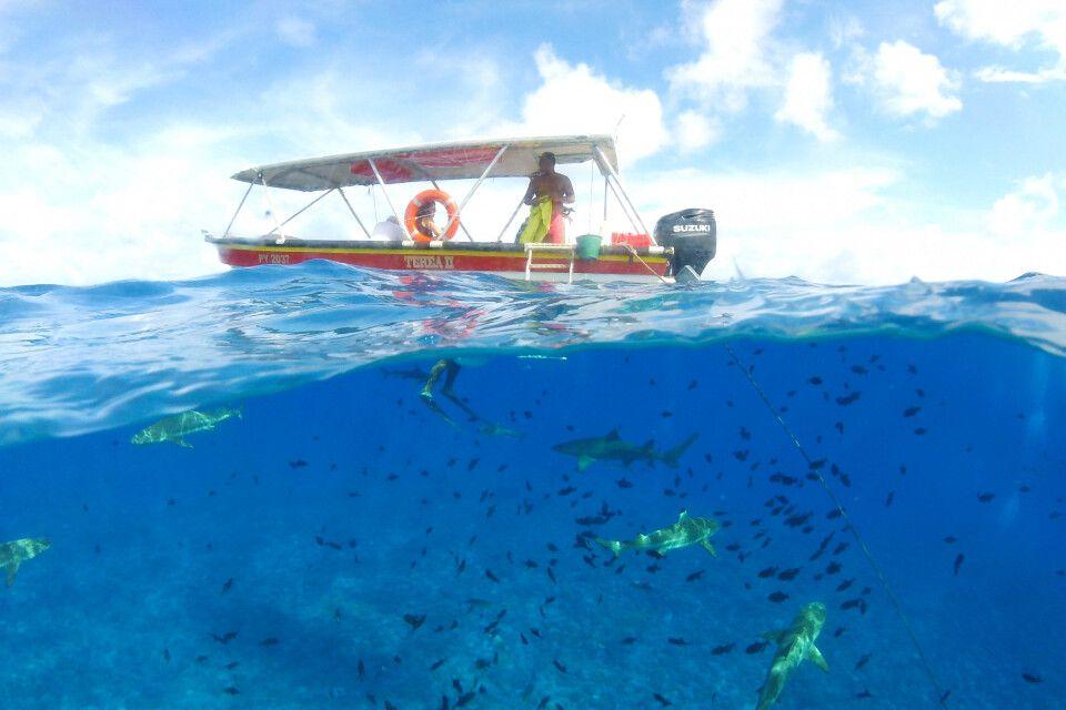 Schnorcheln bei Bora Bora