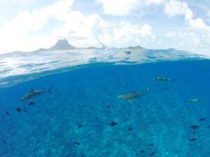 Schwarzspitzenriffhaie vor Bora Bora