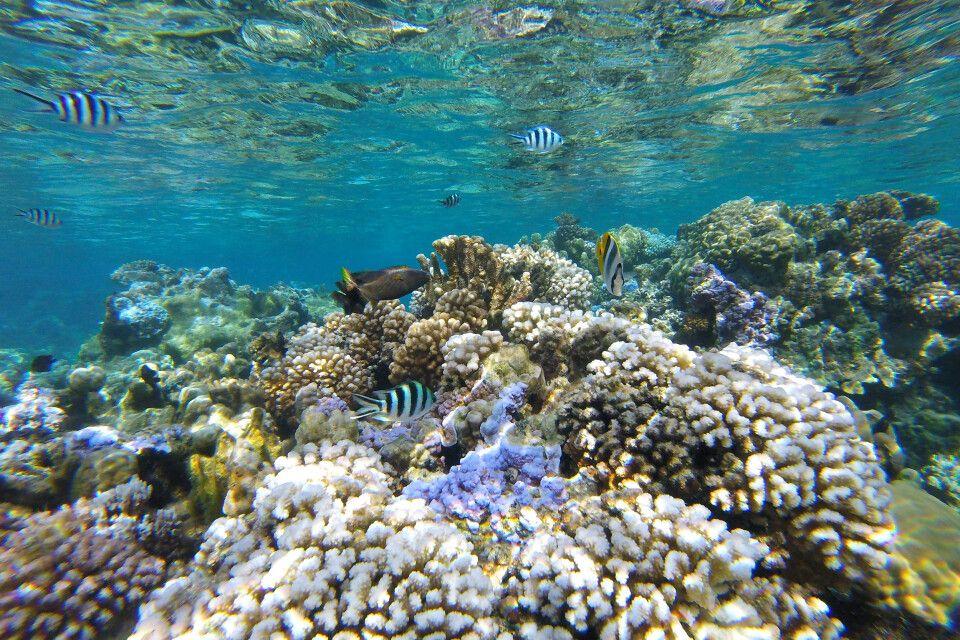 Korallengarten in der Lagune von Bora Bora