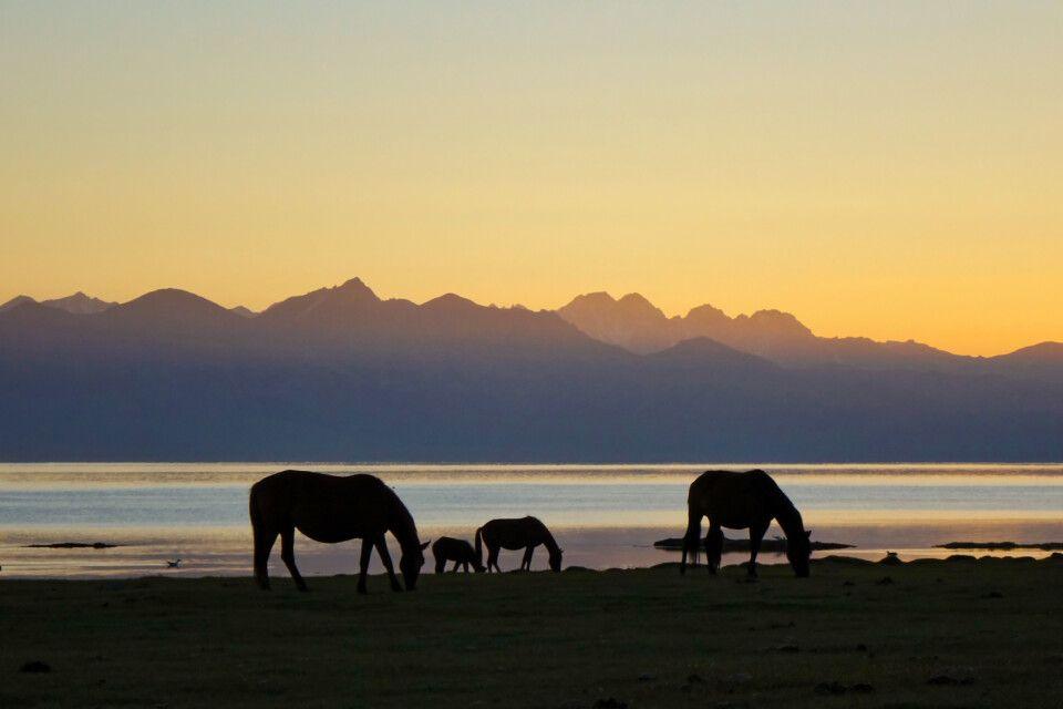 Pferde am Son-Kul