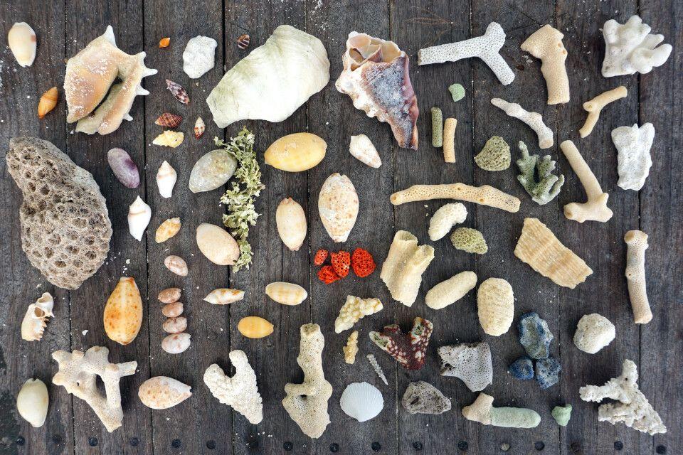 Strandgut gut inszeniert