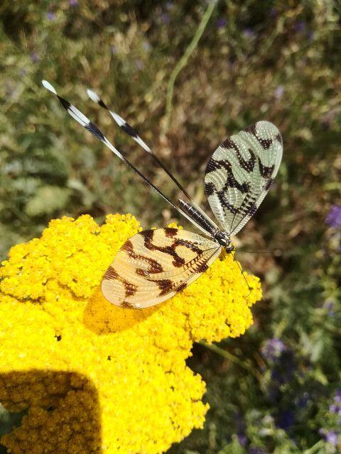 Insektenvielfalt in Armenien