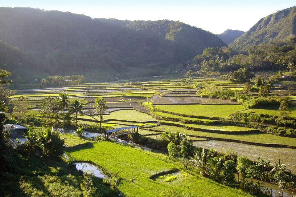 Reisterrassen so weit das Auge blicken kann