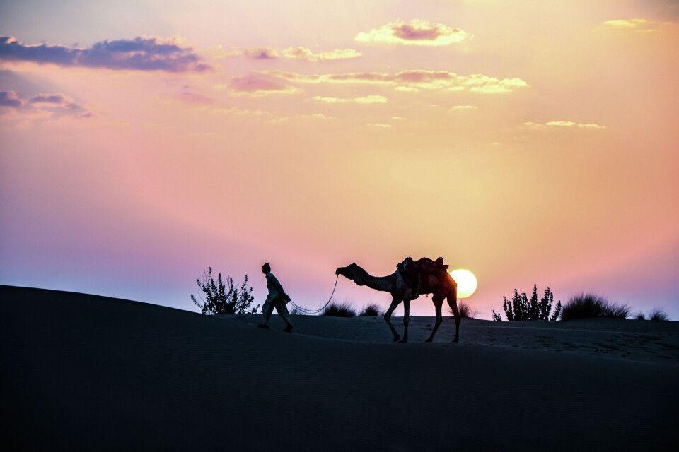 Sonnenuntergang in der Wüste Thar