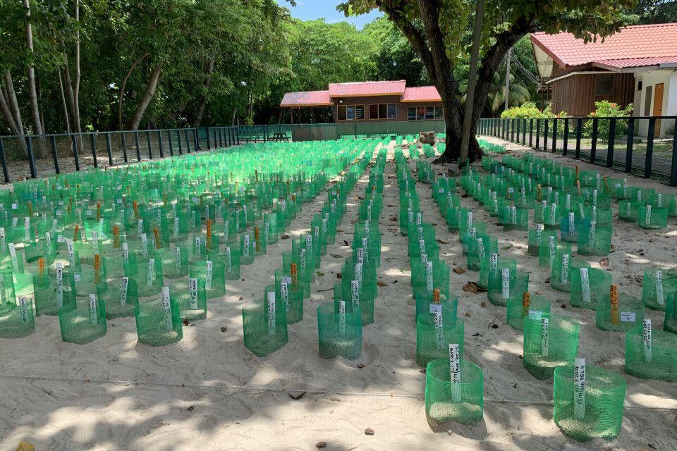 Aufzuchtstation für Meeresschildkröten auf Selingan Island