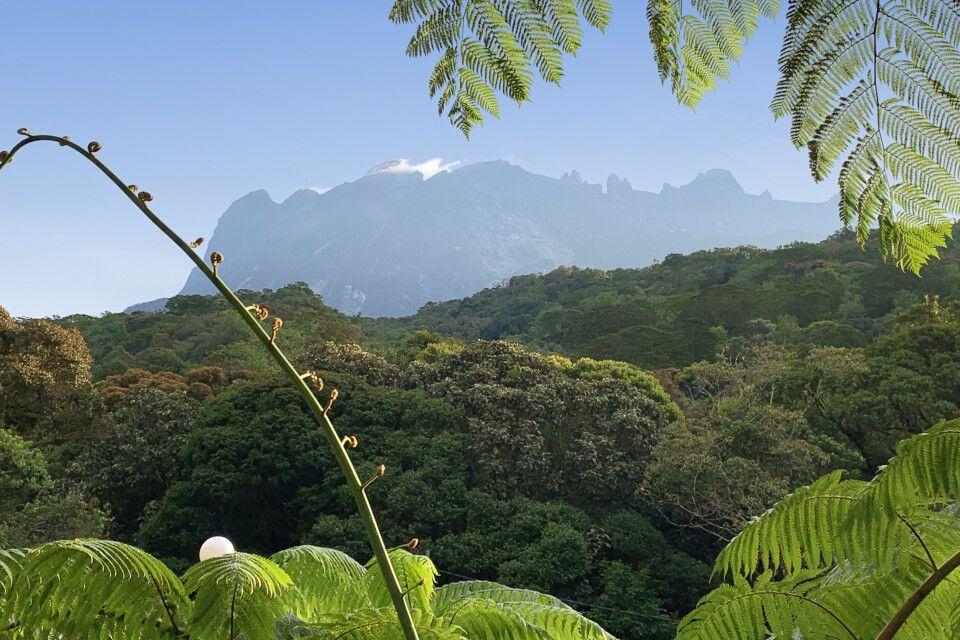 Blick auf den höchsten Berg Südostasiens – Mt. Kinabalu (4095m)