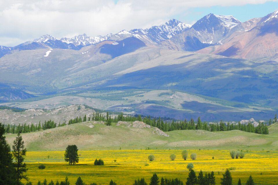 Blühende Kurai-Steppe