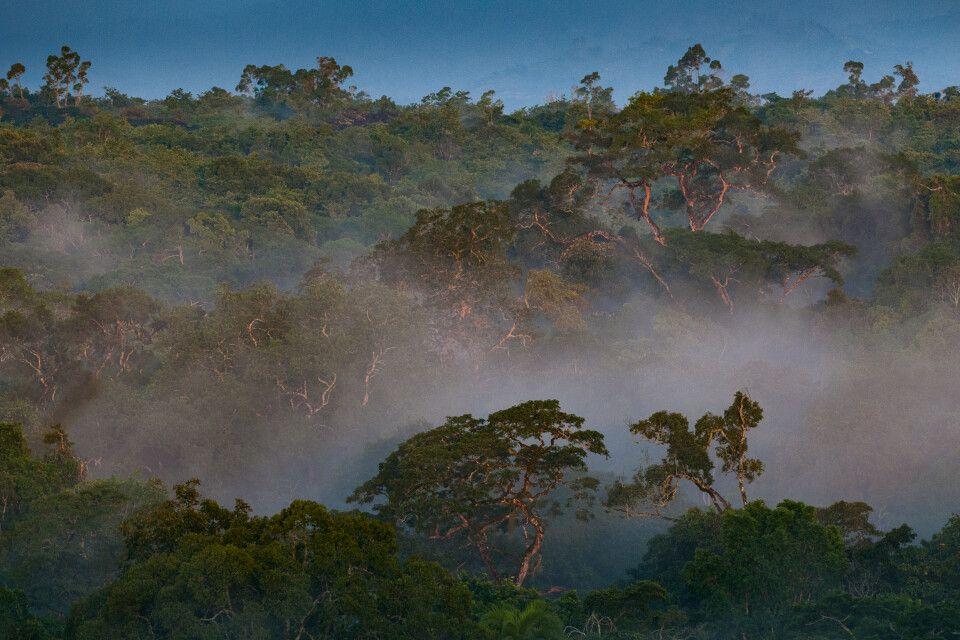 Im Kibale Forest