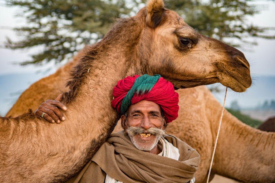 Kamelausritt Wüste Thar