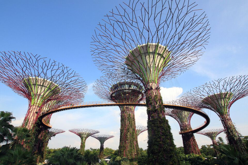 Supertrees in den Gardens by the Bay