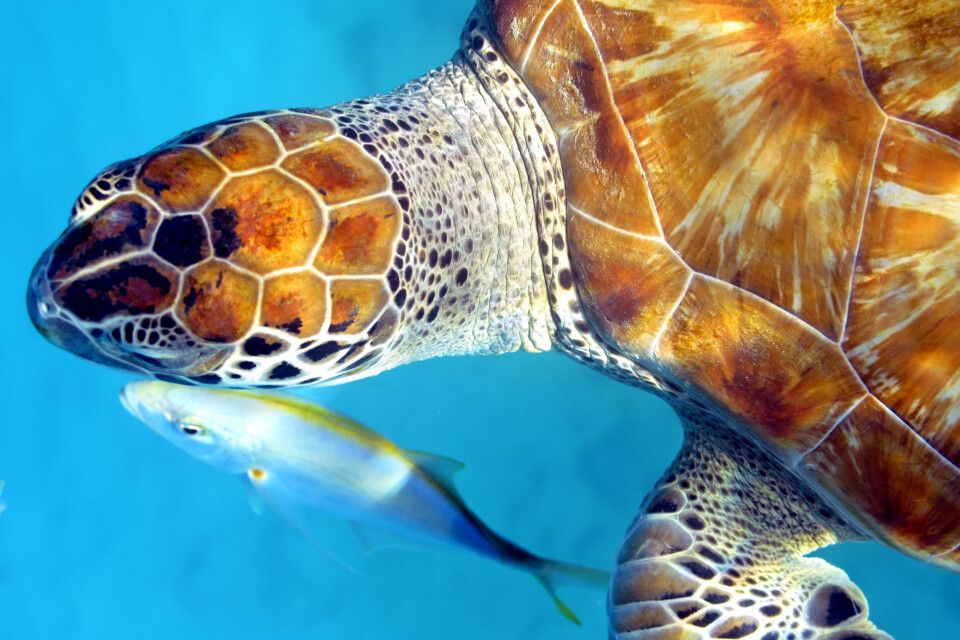 Schildkrötenkuss