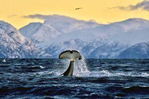 Spektakuläre Szenen bei der Walbeobachtung